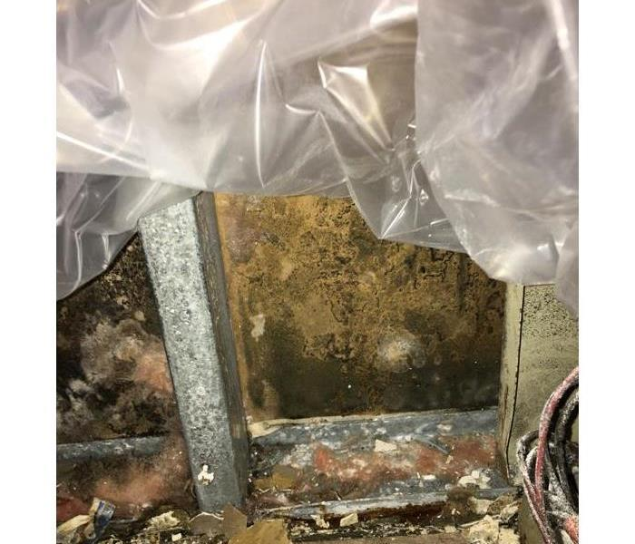 Heavy mold growth in a storage area