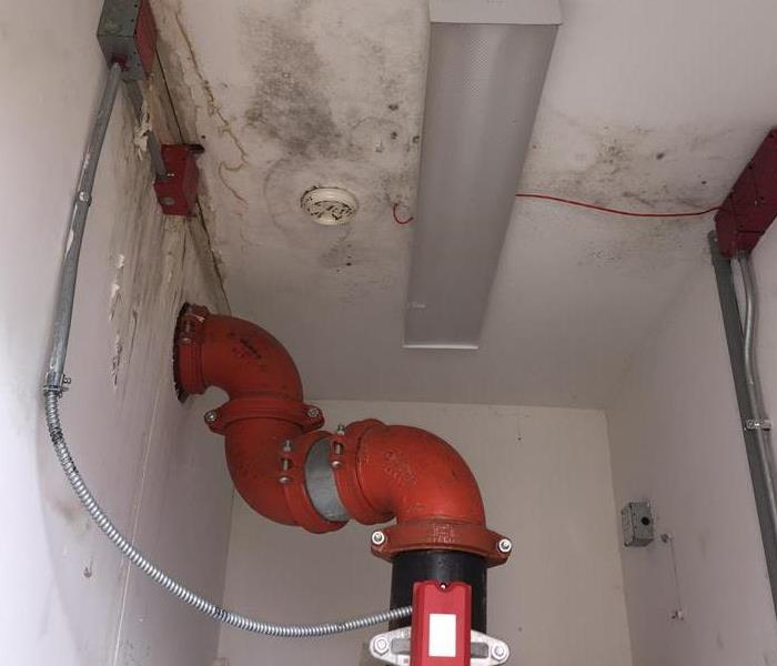 Mold growth in the utility Room