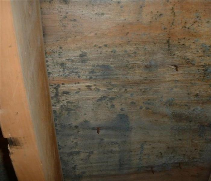 Mold growing on plywood sheathing