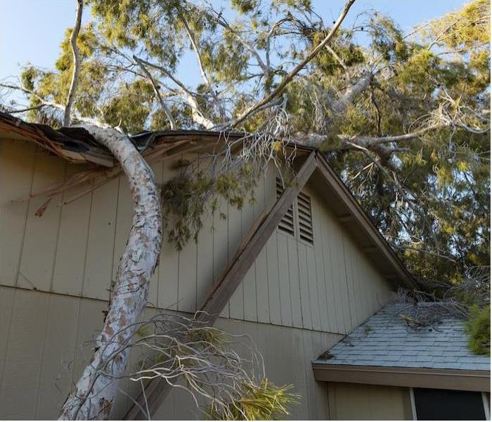 large downed tree laying on top of light brown house
