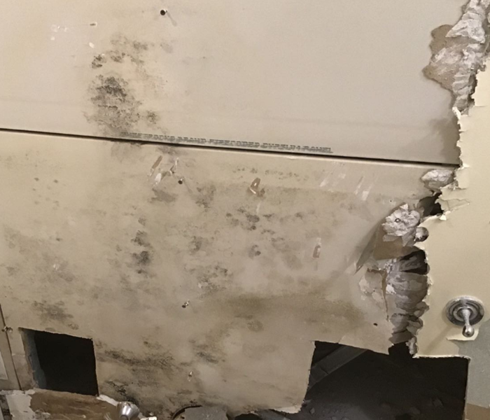 mold growth on drywall