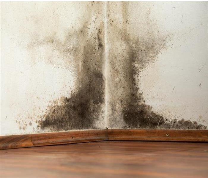 Mold Remediation Common causes of mold