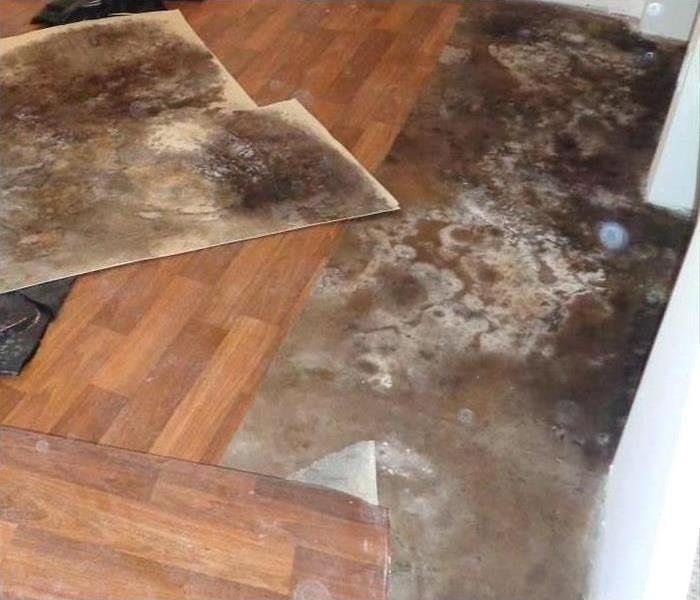 Mold Remediation 8 Places Most People Do not Know Mold Exists
