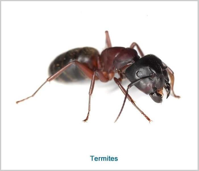 Commercial Pest Prevention Tips For Your Business