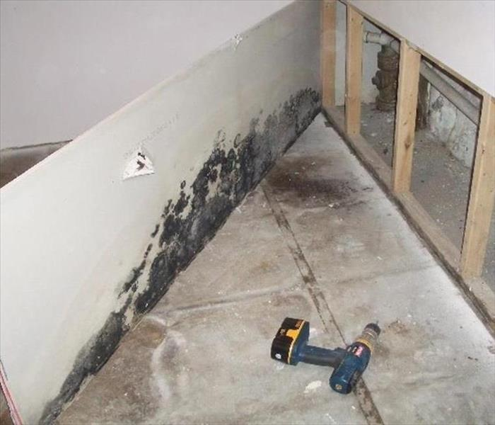 Mold Remediation Mold Facts